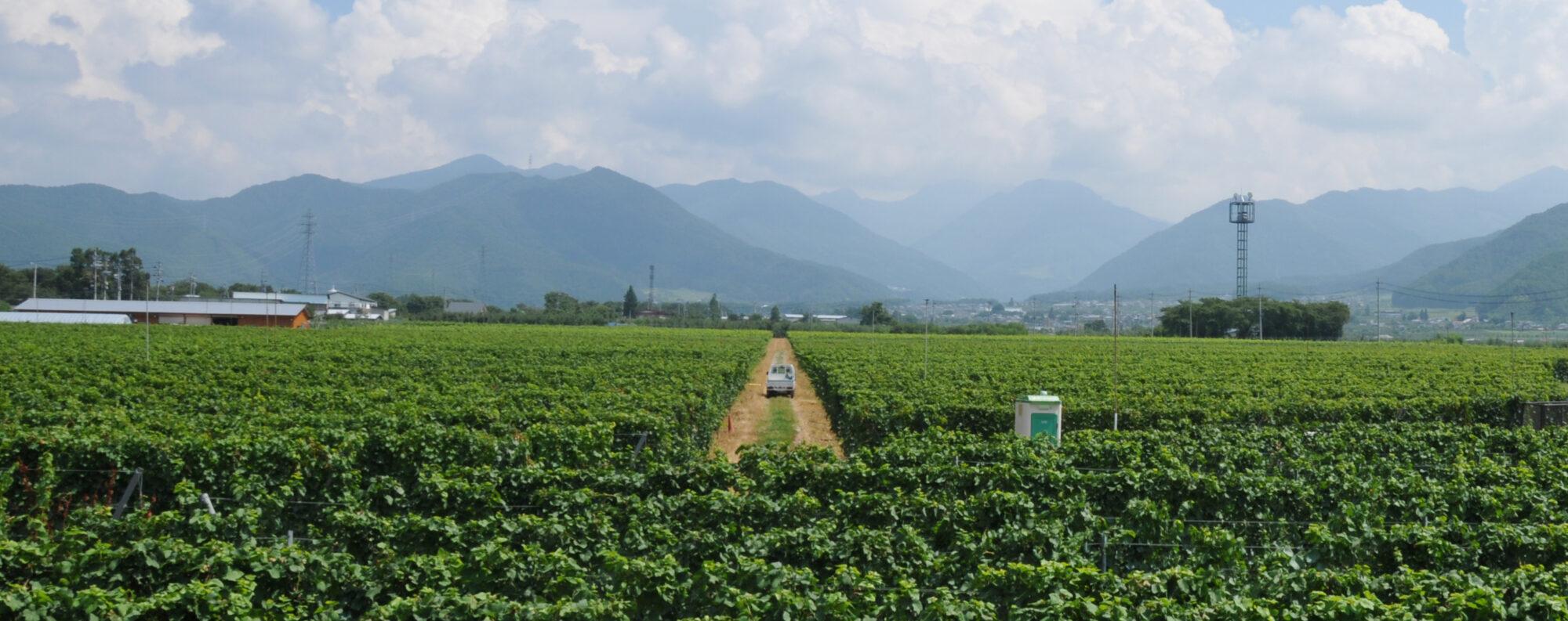 ほっとスタッフブログながの 長野地域の魅力、わたしたちの仕事について、ホットな話題を提供していきます! (写真:高山村・ワイン葡萄畑)
