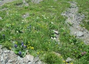 06高山植物