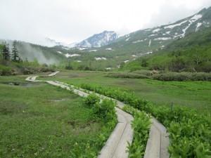 栂池自然園中央部付近から白馬岳を望む