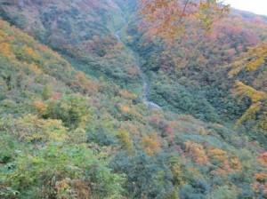 雨飾山中腹(荒菅沢)付近の紅葉