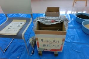 samukawa3