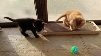 ブログ用子猫写真2