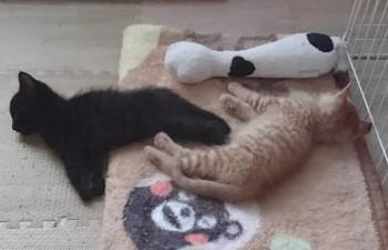 ブログ用子猫写真1