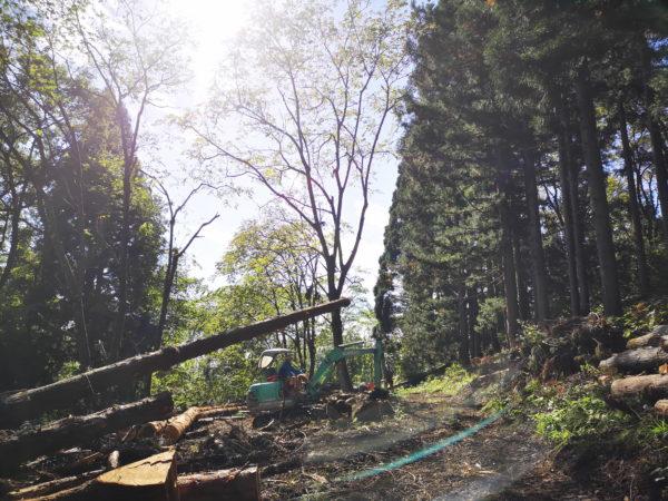小境地区の森の様子