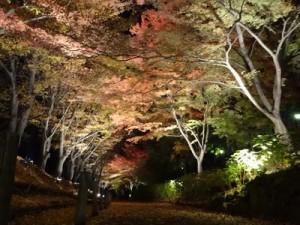 上田城城跡公園けやき並木