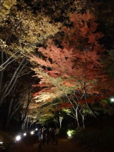 上田城跡公園で紅葉を見上げる人々
