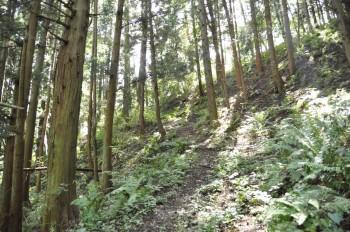 緑が丘コース