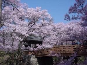 0080-01高遠城址の桜