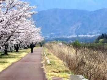 高遠と桜並木