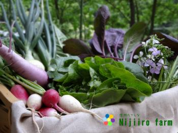 21_organicvegetables-nijiirofarm201506_convert_20151222165516