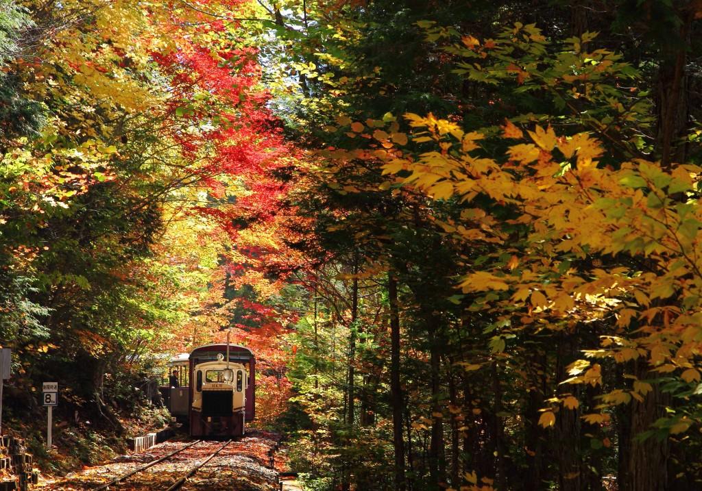 赤沢自然休養林
