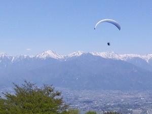 長峰山ワラビ7