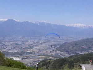 長峰山ワラビ6