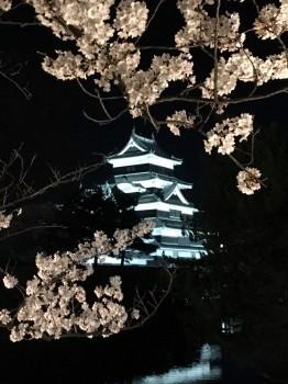 松本城さくら3