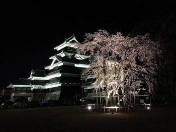 松本城さくら1