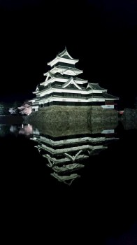 松本城夜桜8