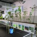 植樹した苗木:18種類