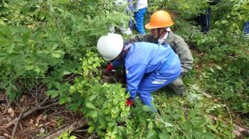 更新補助作業 (萌芽した幼樹のうち残すもの以外を除去しました。)
