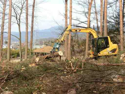 伐採木の整理