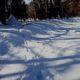 雪の上の足跡から
