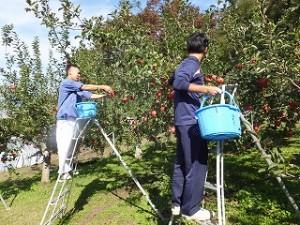 農大祭(リンゴ)