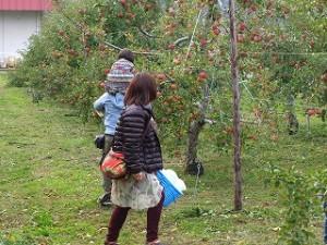 親子でりんごのもぎとり