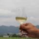 信州たかやまワイナリー第2弾 白ワインが発売されました