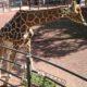 茶臼山動物園で動物たちに癒されてきました\(^o^)/