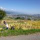 「姨捨の棚田」稲刈り体験の参加者を募集します!