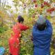 農福連携~福祉事業所が農家へ作業のお手伝いに行っています~