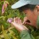 美ヶ原高原において絶滅危惧種アツモリソウの人工受粉を行いました!!