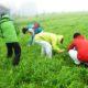 霧ヶ峰高原、美ヶ原高原でニホンジカ食害防除のための忌避剤散布を実施しています