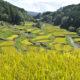 11月1日(木)に「長野県原産地呼称管理制度」お米の官能審査委員会が開催されました!