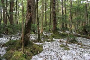 2015.05.06残雪の森