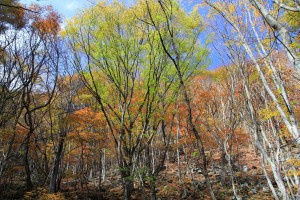 11.30登山道沿いの紅葉