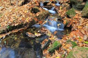 09.31落葉の中の渓流