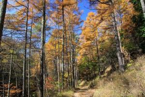 11.44林道沿いの紅葉