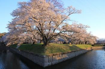 桜とお堀全景