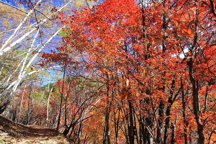 10.42紅葉の登山道