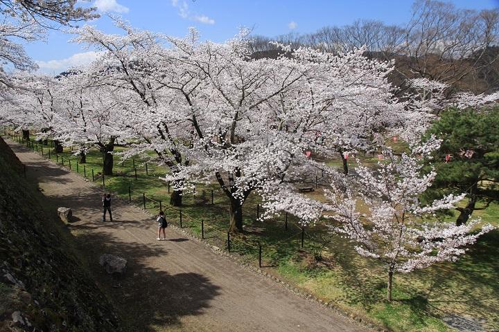 9.23馬場の桜
