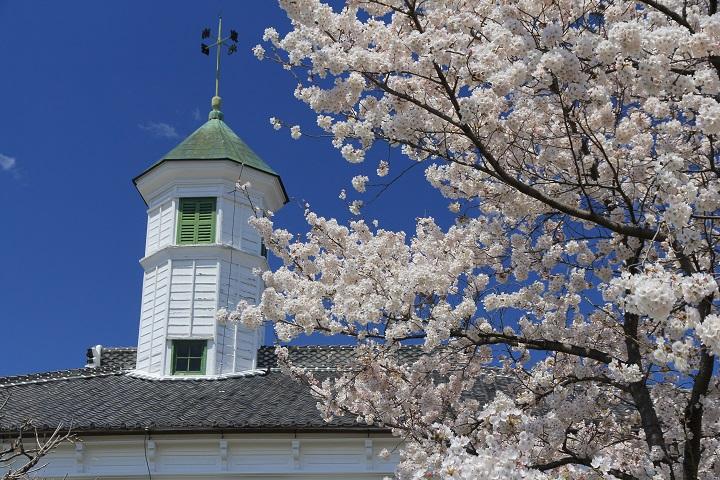 中込学校八角塔と桜