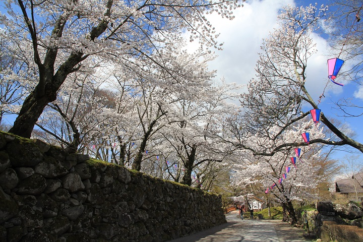 9.15石垣と桜