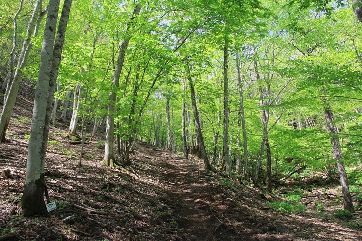 9.27新緑の登山道