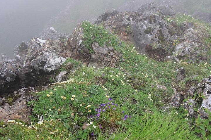 0713 16.34チョウノスケソウのお花畑
