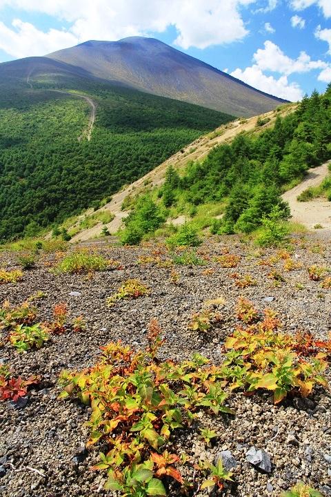 0910 12.43草紅葉と浅間山
