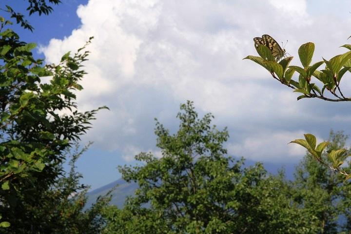 0910 10.12アゲハチョウと浅間山(雲の中)