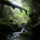 南牧村「苔の輝く森」へ!