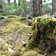 苔を愛する全国の皆さま!北八ヶ岳「苔の森」開き2019ですよ!