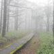 神秘的な、霧の「御泉水自然園(立科町)」に行ってみました!