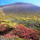 浅間山の紅葉です!!